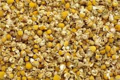 Chamomile plant Royalty Free Stock Image