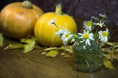 Chamomile and pumpkin in autumn foliage for Halloween stock images