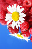 Chamomile and raspberries Stock Images