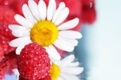 Chamomile and raspberries stock photography