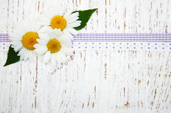Chamomile with ribbon Royalty Free Stock Photography