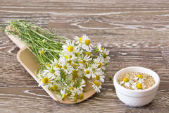Chamomile on a scoop Royalty Free Stock Image