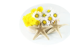 Chamomile and sea stars Royalty Free Stock Photo
