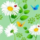 Chamomile seamless background Stock Image