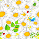 Chamomile seamless background Royalty Free Stock Photo