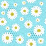 Chamomile seamless pattern Stock Photo