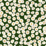 Chamomile seamless pattern. Daisies on green background. Chamomile seamless pattern. Daisies on retro green background. Vector illustration Stock Photos