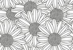Chamomile seamless pattern Stock Image