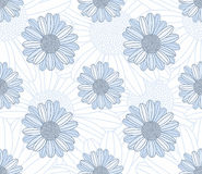 Chamomile seamless pattern Stock Photos