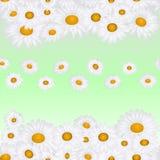 Chamomile seamless pattern Stock Photography
