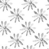 Chamomile seamless texture Stock Photos