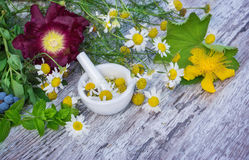 Chamomile, St. John's wort, Lady's mantle, peppermint ... Chamomile, St. John's wort, Lady's mantle, peppermint and other plants Stock Photo