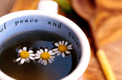 Chamomile tea with chamomile daisy flowers Royalty Free Stock Photo