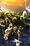 Chamomile tea and flowers. Herbal medicine: Cup of Chamomile tea and Chamomile flowers close up stock photo
