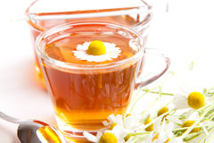 Chamomile tea with fresh blossoms an honey, white background royalty free stock image