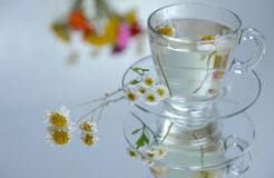 Chamomile tea may Royalty Free Stock Images