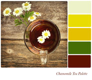 Chamomile Tea Palette Royalty Free Stock Images