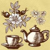 Chamomile tea and rosehip Stock Photos