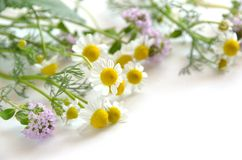 Chamomile and thyme Royalty Free Stock Images