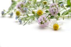 Chamomile and thyme Royalty Free Stock Photo