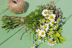 Chamomile, thyme and sage Stock Images