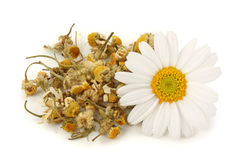 chamomile torkad tea Royaltyfri Bild
