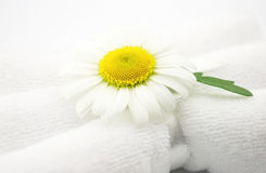 Chamomile with towels Royalty Free Stock Photography