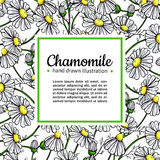 Chamomile vector drawing frame. Isolated daisy wild flower and leaves. Herbal artistic style illustration. Stock Images