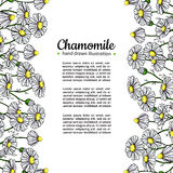 Chamomile vector drawing frame. Isolated daisy wild flower and leaves. Herbal artistic style illustration. Stock Photography