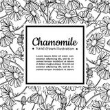 Chamomile vector drawing frame. Isolated daisy wild flower and leaves. Herbal engraved style illustration. Royalty Free Stock Images