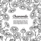 Chamomile vector drawing frame. Isolated daisy wild flower and leaves. Herbal engraved style illustration. Stock Images