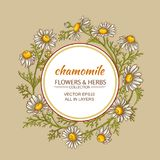 Chamomile vector frame. Chamomile flowers vector frame on color background Stock Photos