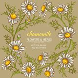 Chamomile vector frame. Chamomile flowers vector frame on color background Stock Image