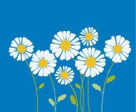 Chamomile vector illustration. white daisy flower in decorative Stock Photography