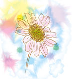 Chamomile watercolor Royalty Free Stock Photo