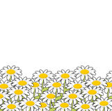 Chamomile. White flowers summer meadow. Beautiful wild flowers. Royalty Free Stock Photography