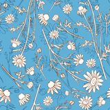 Chamomile wild field flower isolated on blue background botanical hand drawn daisy sketch vector doodle illustration. Seamless floral pattern for design package Stock Images