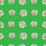 Chamomile wild field flower isolated on green background, hand drawn daisy sketch vector doodle illustration, seamless. Floral pattern for design package tea Royalty Free Stock Photography