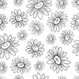 Chamomile wild field flower isolated on white background botanical hand drawn daisy ink sketch vector illustration. Seamless floral pattern for design package Stock Photos