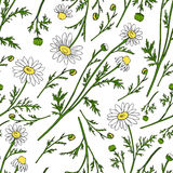 Chamomile wild field flower isolated on white background botanical hand drawn daisy sketch vector doodle illustration. Seamless pattern for design package tea Royalty Free Stock Photos
