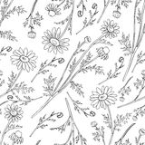 Chamomile wild field flower isolated on white background botanical hand drawn daisy sketch vector doodle illustration. Seamless pattern for design package tea Royalty Free Stock Photography