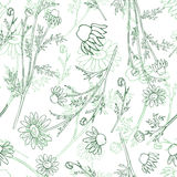 Chamomile wild field flower isolated on white background botanical hand drawn daisy sketch vector doodle illustration. Seamless pattern for design package tea Stock Photo
