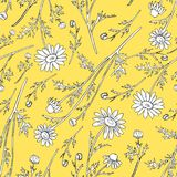 Chamomile wild field flower isolated on yellow background botanical hand drawn daisy sketch vector doodle illustration. Seamless floral pattern for design Royalty Free Stock Photos