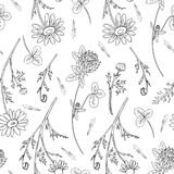Chamomile wild field flower, Red clover, shamrock isolated. On white background hand drawn daisy vector doodle illustration, seamless pattern for design package Stock Images