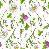 Chamomile wild field flower, Red clover, shamrock  on white background hand drawn daisy vector doodle. Illustration, seamless pattern for design package tea Royalty Free Stock Image