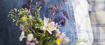 Chamomile in woman hands on summer jeans trousers background.  Stock Image