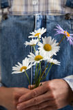 Chamomile in woman hands on summer jeans trousers background Stock Image