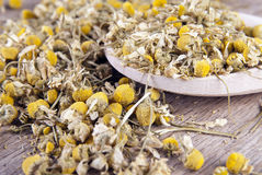 Chamomile in wooden spoon on table Royalty Free Stock Photography