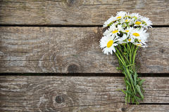 Chamomile on wooden table stock photos