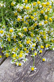 Chamomile on wooden table Stock Image